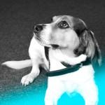 Hund Emma