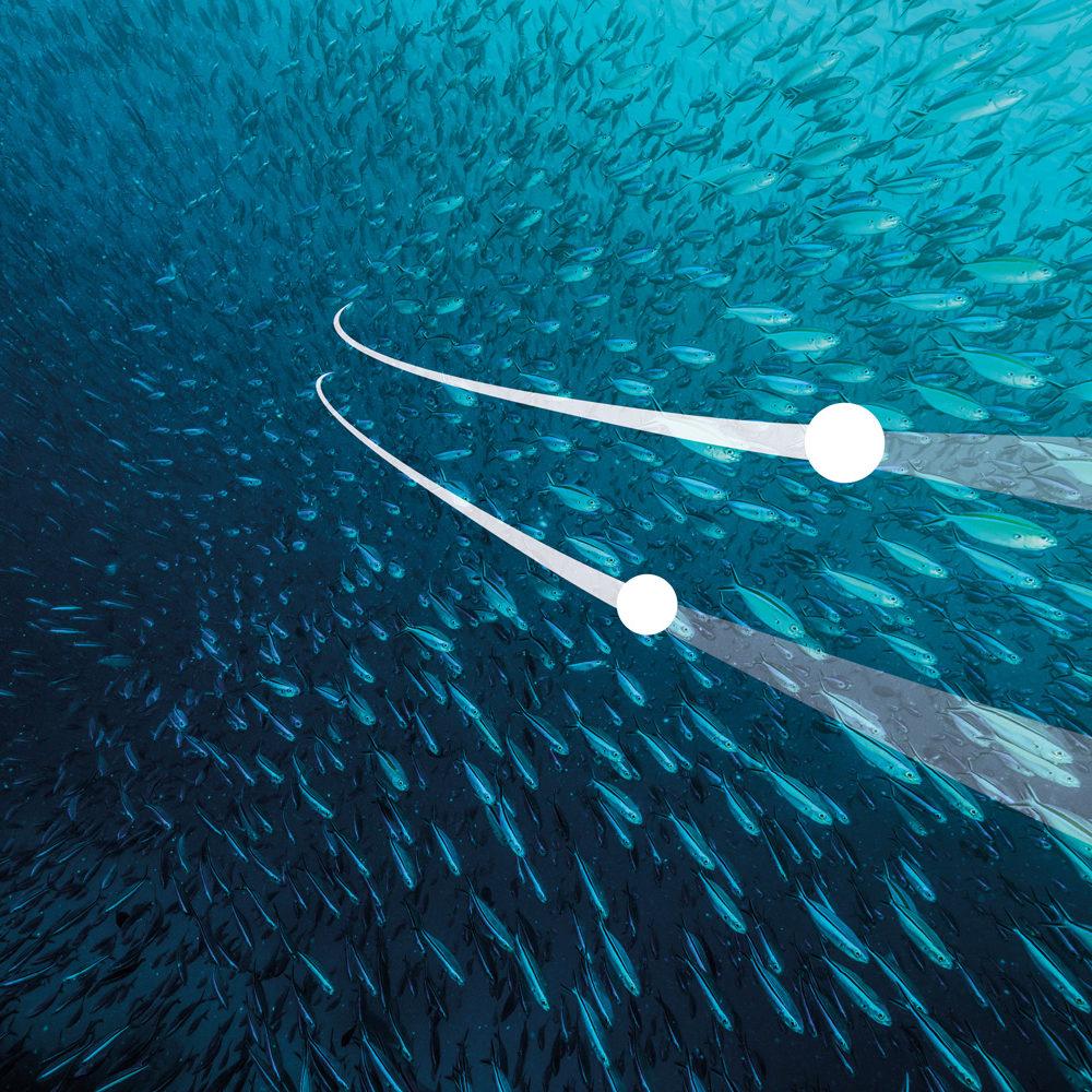 Landingpage-OFE Fischschwarm
